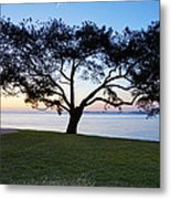 Tree By The Bay Metal Print