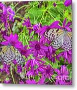 2 Tree Nymph Butterflies Metal Print