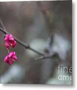 Tree Seed Capsule Pod Bursts Metal Print