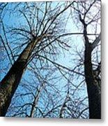 2 Trees Metal Print