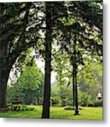 Trees In A Park, Adams Park, Wheaton Metal Print