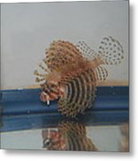 Tropical Lion Fish Metal Print