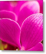Tropical Orchid Flower Blossoms Metal Print