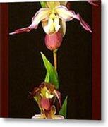 Tropical Orchids Metal Print