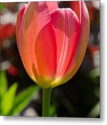 Tulip On The Green Background Metal Print