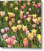Tulips At Dallas Arboretum V92 Metal Print