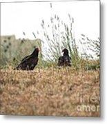 Turkey Vultures Metal Print