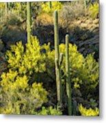 Usa, Arizona, Coronado National Forest Metal Print