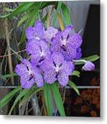 Vanda Orchid Metal Print