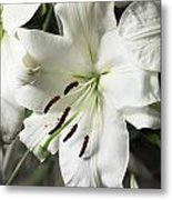Vase White Lilies With Falling Petals As They Die Metal Print
