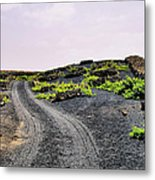 Vineyard On Lanzarote Metal Print
