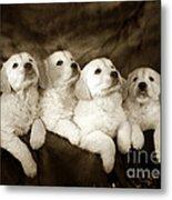 Vintage Festive Puppies Metal Print