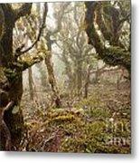 Virgin Mountain Rainforest Of Marlborough Nz Metal Print