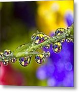Water Drops On A Flower Stem Metal Print