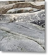 Weddell Seal Metal Print