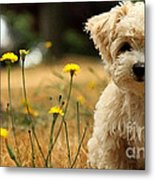 West Highland White Terrier Painting Metal Print