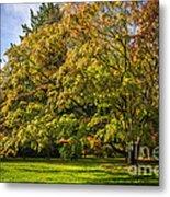 Westonbirt Arboretum Metal Print