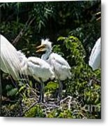 Whats For Lunch Metal Print