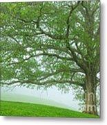 White Oak Tree In Fog Metal Print