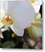 White Orchid Three Metal Print