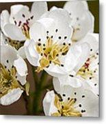 Beautiful White Spring Blossom Metal Print