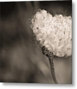 White Whisper Metal Print