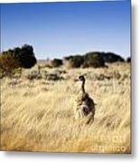 Wild Emu Metal Print by Tim Hester