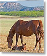 Wild Horses Mother And Foal Metal Print
