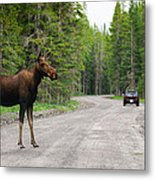 Wild Moose Metal Print