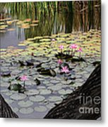 Wild Water Lilies In The River Metal Print