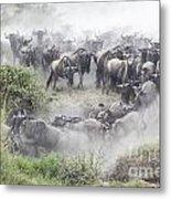 Wildebeest Migration 1 Metal Print