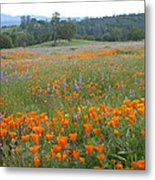 Wildflower Wonderland 10 Metal Print