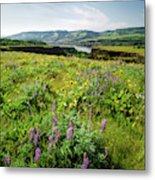 Wildflowers In A Field, Columbia River Metal Print