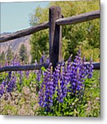 Wildflowers On The Fence Metal Print
