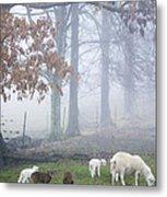 Winter Lambs Foggy Day Metal Print