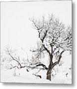 Winter Sage Metal Print