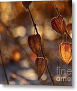 Winter's Light Metal Print