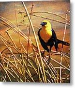 Yellow - Headed Blackbird Metal Print