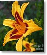 Yellow Tiger Lily Metal Print