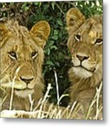 Young Brothers Metal Print