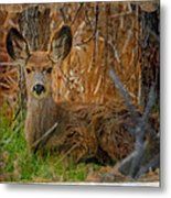 Young Mulie Metal Print
