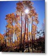 California, Sierra Nevada Mountains Metal Print