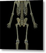 The Skeleton Metal Print