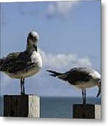 201409090-046 Sea-gull-preening 2x3 Metal Print
