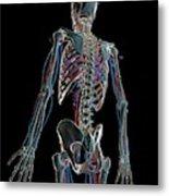 Human Vascular System Metal Print