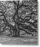 Angel Oak Tree In Black And White Metal Print