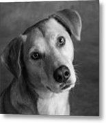 Portrait Of Red Bone Coon Mix Dog Metal Print