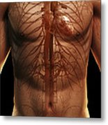 The Cardiovascular System Metal Print