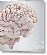 Brain With Blood Supply Metal Print