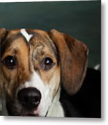 Portrait Of A Mixed Dog Metal Print